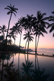 coconut trees at sunrise poster