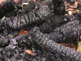 burned logs poster