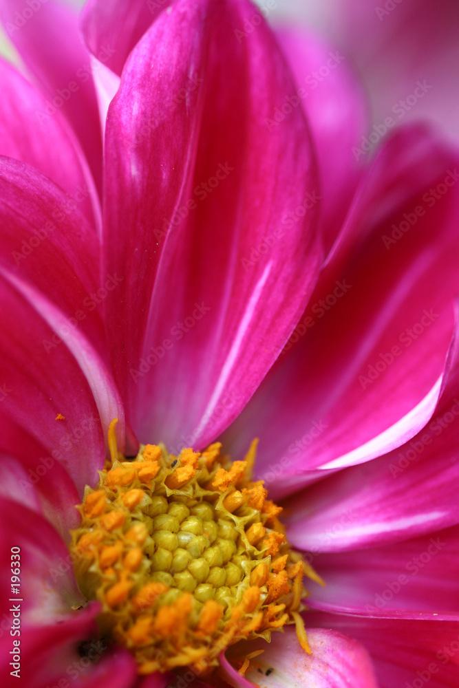 kolor kolor kwitnąć - powiększenie