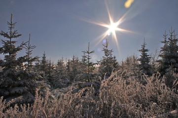winterlandschaft_3