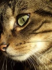 cat eye #2
