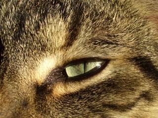 cat eye #3