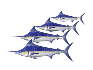 four marlin