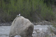 seagull on boulder