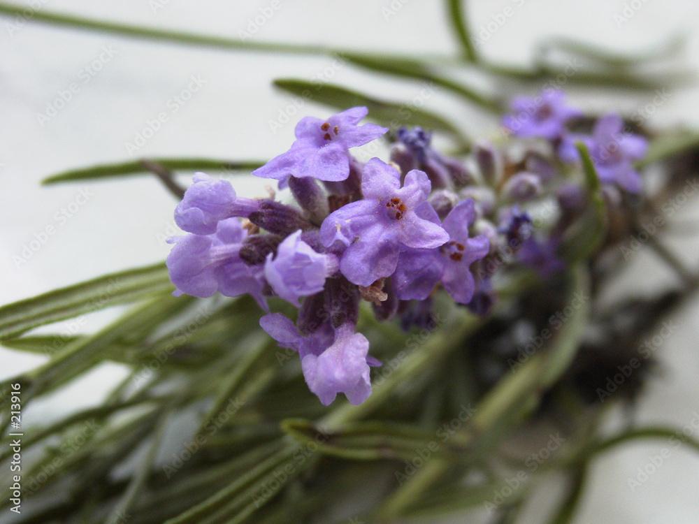 zbliżenie roślina kosmetyk - powiększenie