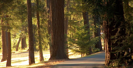road through northern california redwoods