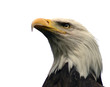 Leinwanddruck Bild bald eagle, isolated