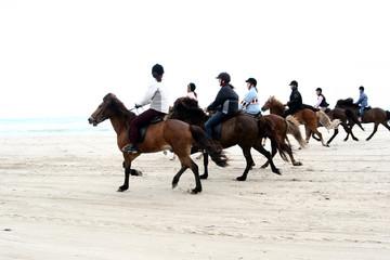 danish horses on the beach