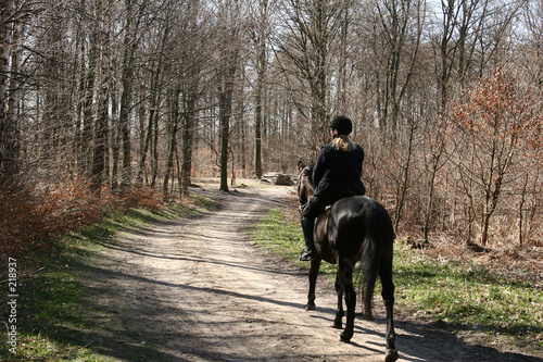 Poster Paardrijden danish horses