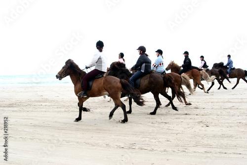 Leinwanddruck Bild danish horses on the beach