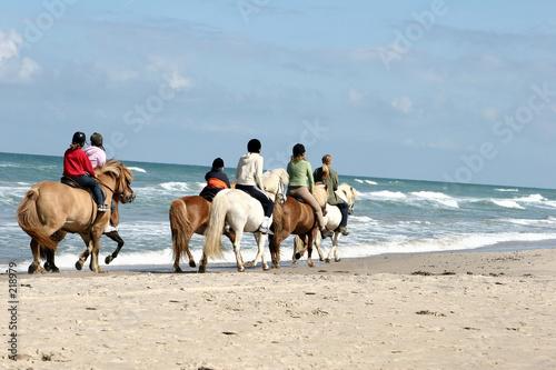 Foto op Plexiglas Paardrijden danish horses on the beach