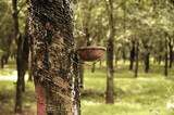 rubber tree plantation in vietnam poster