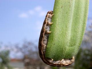 caterpillar 4