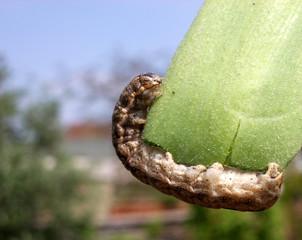 caterpillar 5