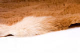 fur edge poster