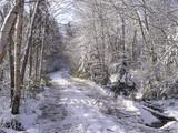 snow falls poster