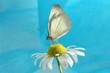 roleta: butterfly