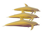 golden dolphins poster