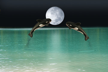 killer whales over moon