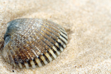 shell macro in sand