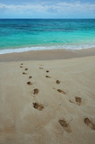 footprints on a tropical beach. poster
