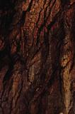 abstract bark poster