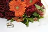 orange gerbera with wedding bands, rings poster