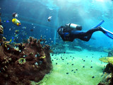 oglądanie podwodne