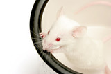 mouse in cup poster