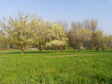 meadow with apple-trees poster