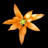 flower series - ginger poster