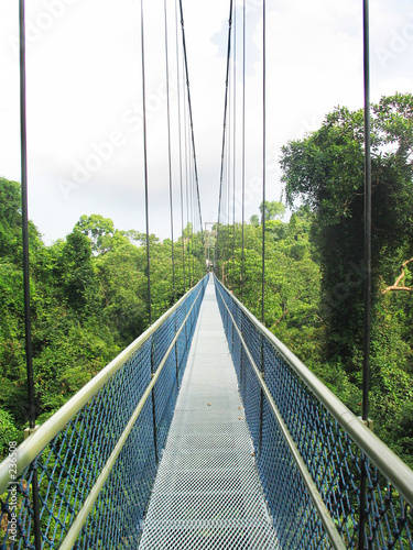 poster of treetop walk