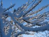 bush under hoar-frost poster