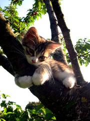le chat sasha (ne sachant pas chasser..)