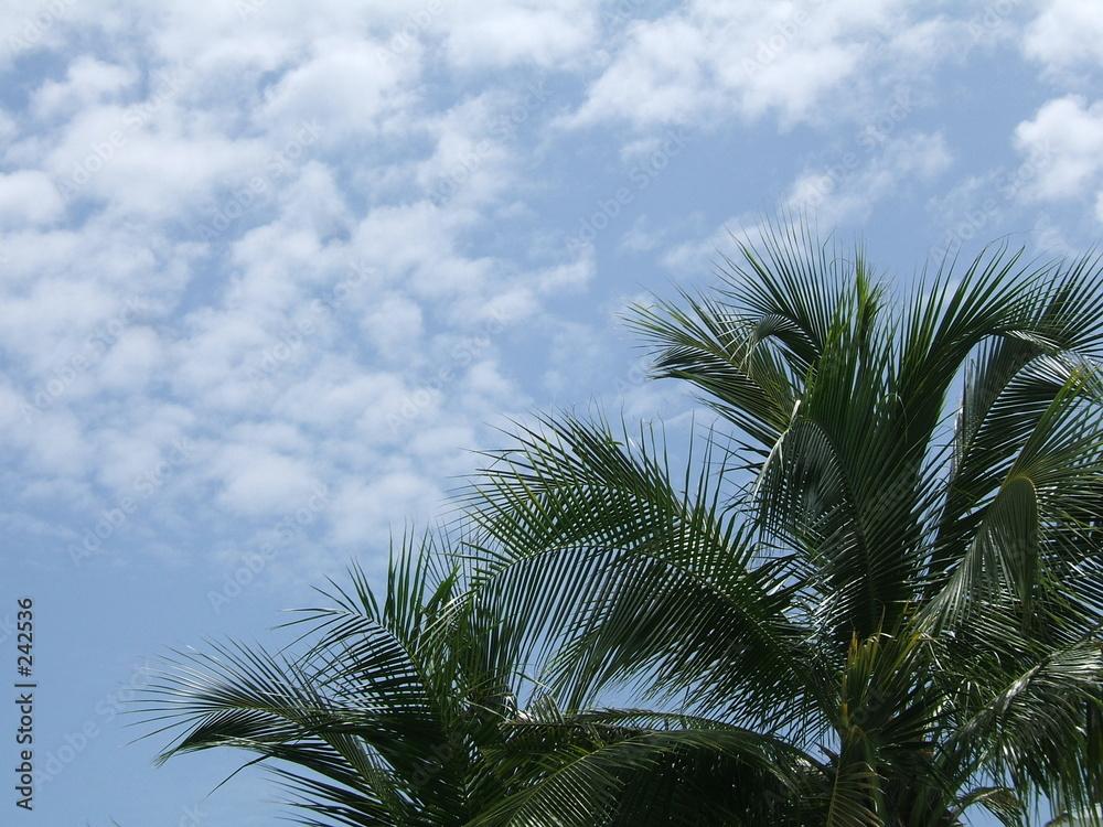 roślina niebo podróż - powiększenie
