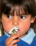 little girl and a daisy poster