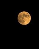 harvest moon poster