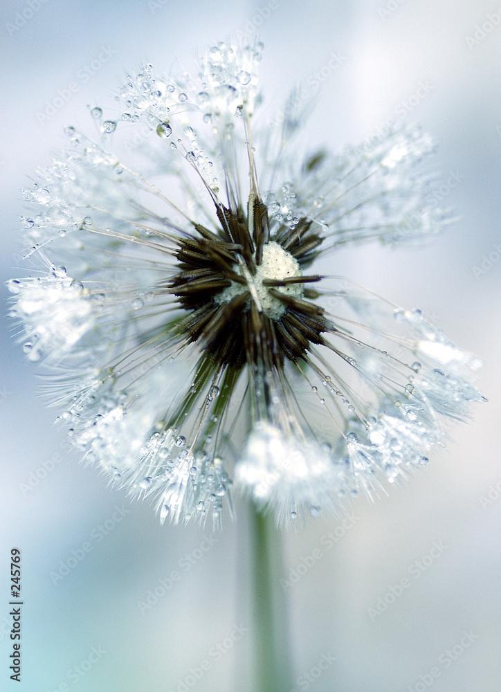 flora chwast lodowych - powiększenie