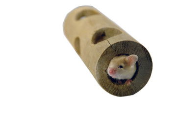 mouse in tube
