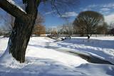 winter scene by a creek poster