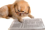 dog reads newspaper poster