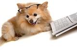 dog doing sudoku puzzle poster
