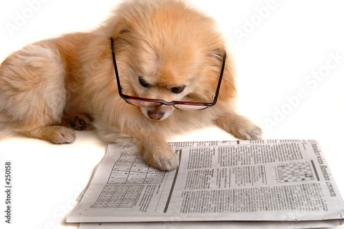 poster of dog reads newspaper
