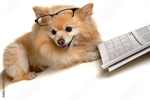 poster of dog doing sudoku puzzle