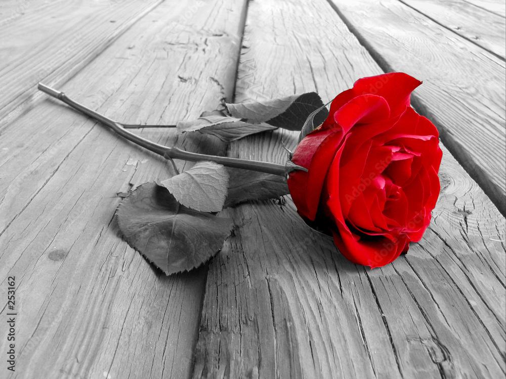 Czerwona róża na drewnianym tle - powiększenie