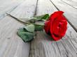 Quadro rose on wood
