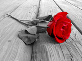 rose on wood bw - Fine Art prints