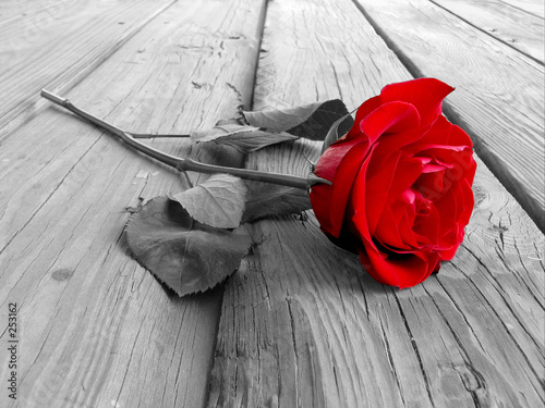Aluminium Rozen rose on wood bw