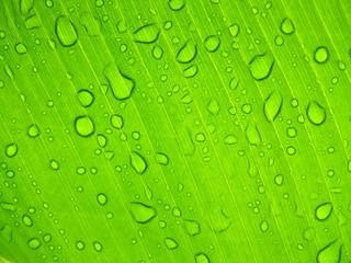 gouttes d'eau en transparence