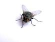an fly